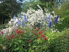 IMG_6611 (jrcollman) Tags: philadelphus harlowcarrgarden plants pplant delphinium monarda mplant