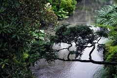 Rains on the pond (ganagafoto) Tags: ganagafoto travels viaggi asia japan giappone nikko pond laghetto green verde pioggia rain gardens giardini water acqua outdoor landscapes paesaggi