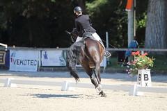 IMG_7781 (dreiwn) Tags: dressage dressur dressuur pferd reitturnier turnierreiten pferdesport horse horseback horseriding equestrian reitverein dressurprfung kandare doublebridle reiten pferde reitplatz ridingarena