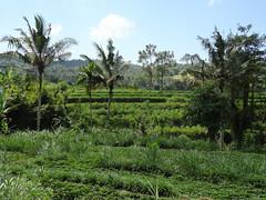 DSC05304.jpg (J0celyn79) Tags: asie bali indonésie karangasem id