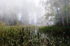 The River Without Return (ristoranta) Tags: kaislikko sumu nikond7100tamron16300mmf3563 maisema piv joki antiainen syksy s vastavalo lohja