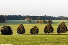 ALLEE BEI WACHBHL (PADDYSCHMITT.DE) Tags: wachbhl bume allee bauernhofimallgu saftigesommerwiesen leutkirch starkenhofen westallgu