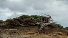 l'albero (paola.bottoni) Tags: sardegna albero natura italy