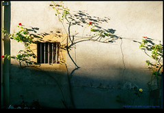160728-0128-XM1.jpg (hopeless128) Tags: france shadows eurotrip wall window flowers 2016 confolens aquitainelimousinpoitoucharen aquitainelimousinpoitoucharentes fr