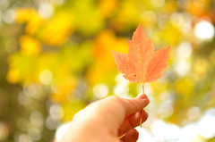 Hello Fall (UniquelyHis4ever) Tags: fall autumn season leaf leaves color change photography nikon perspective