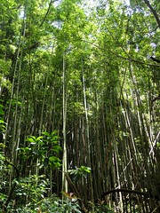 DSC03298 (Kate Hedin) Tags: flowers trees mountains water island hawaii waterfall woods oahu hike falls trail jungle honolulu manola