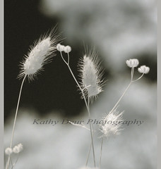 Just Weeds (Kathy Deur Photos) Tags: garden ir weeds infrared ircamera