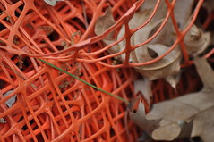 construction netting and dead leaves (funky flying monkey) Tags: leaves construction deadleaves netting