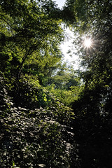 Il sole tra le fronde () Tags: trees light sun verde green alberi photography photo foto photographer photos branches rays fotografia sole luce rami stefano fotografo raggi trucco fronde zush stefanotrucco
