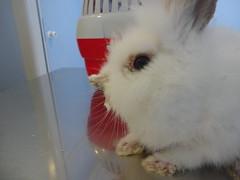 DSC03007 (Hospital Veterinario Taco. Santa Cruz de Tenerife.) Tags: hospital conejo perro taco gato clnica mascota salud veterinaria piel sarna veterinario acaros dermatologa