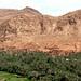 Beirando o deserto os vales enchem-se de palmeiras