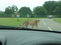 """Longleat Safari Park • <a style=""""font-size:0.8em;"""" href=""""http://www.flickr.com/photos/81195048@N05/8017596041/"""" target=""""_blank"""">View on Flickr</a>"""
