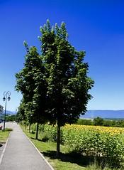 BORDER PEDESTRIAN FRANCE SWITZERLAND (JEANPHI2206) Tags: nyc paris france boston gold switzerland san suisse sfo montreal zurich border diego monaco bern lax frontiere montres banques