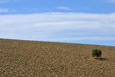 Solo (luporosso) Tags: natura nature naturaleza naturalmente nikond300s nikon scorcio scorci albero tree cielo sky terra heart country countryside colline hills marche italia italy