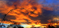 WAYWARD VINES (elliott.lani) Tags: tasmaniansunset colour colourful bright beautiful vibrant skies