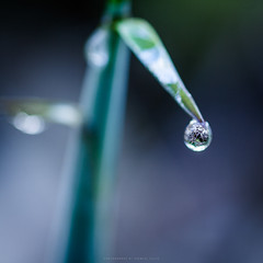Poetic morning (Premysl Fojtu) Tags: nature grass detail macro closeup bokeh morning dew drop water beauty canon dslr eos 350d sigma 50mm simple
