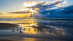 Under the morning rays (Masa_N) Tags: morning sand australia winter seashore clouds water birds seagull sunrays beach reflection goldcoast sea surfersparadise queensland  au