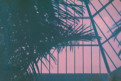 Dream on (ijarosek) Tags:  4 svema ds4 praktica tl5b prakticatl5b 35mm film expired slr pink palms glass greenhouse dream acid tropical fvszkert budapest hungary magyarorszg washed out vaporwave pastel spring grain iso50