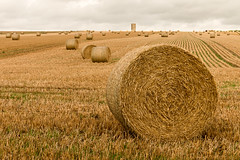 Straw bales to the horizon! (Keith in Exeter) Tags: straw bale stubble field round farm farming harvest agricultural landscape wiltshire county england outdoor gold haybalestubble
