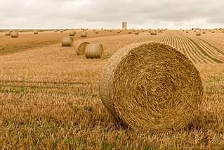 Straw bales to the horizon!