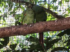 """Le Parc des Oiseaux d'Iguaçu: la grande volière aux perroquets <a style=""""margin-left:10px; font-size:0.8em;"""" href=""""http://www.flickr.com/photos/127723101@N04/29016856884/"""" target=""""_blank"""">@flickr</a>"""