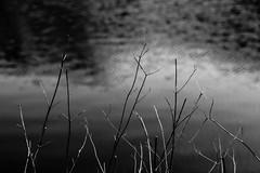 Fragile moments (elisabartolini) Tags: canonphotography canon progress learning love wanderlust exploring wandering beautifulplaces stillness details lagodivagli monochrome grey lake water lakeside beautiful natural nature shades sticks blackandwhite biancoenero blackwhitephotography bw bnw bnwlovers