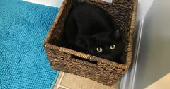 Sophie in her favorite box via http://ift.tt/29KELz0 (dozhub) Tags: cat kitty kitten cute funny aww adorable cats