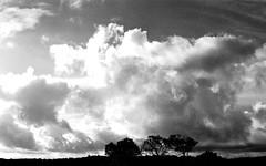 mpix 59 081016 7n 50mm IL 400 081516 019e ~ Big Sky (BDC Photography) Tags: pipecreek texas usa ilfordsuperxp2400film ilford canon canoneoselan7n canonslr35mmfilmcamera blackwhitefilm filmnoiretblanc epsonperfectionv600photoscanner texashillcountry banderacounty latigoranch canonef50mmf14usmlens bwfpro58mm0222xmrcyellowfilter bwfpro58mm010uvhaze1xmrcfilter bw58mm16orange0404x550mrcfilter canoneos33v bwfp