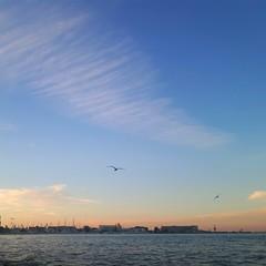 Last days of holidays (Gabiosa) Tags: poland gdynia balticsea holidays sunset evening sea sky seagull