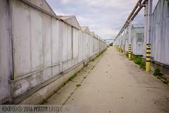 PLW_5543 (Laszlo Perger) Tags: wien vienna österreich austria blumengarten hirschstetten flowergarden