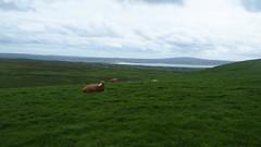 P1010866 (J. Prat) Tags: cliffs moher ireland irlanda acantilados
