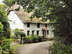 001 Cornish Cottage (saxonfenken) Tags: 1108corn 1108 cottage cornwall white thatched framed house pregamewinner superhero challengeyouwinner thefactorychallenge gamewinner gamex2 perpetual friendlychallenges