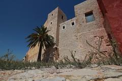 Palme auf Ibiza (Klaus R. aus O.) Tags: ibiza urlaub spanien ruhe erholung ferien sonne meuer festung katalanisch eivissa balearen ibizenk blauer himmel