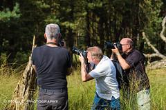 DSC02685.jpg (ChrMous) Tags: nederland nationaalparkhogeveluwe tamronspaf90mmf28dimacro11 veluwe