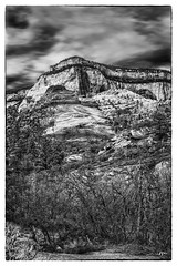DSC_6833-Edit-EditFAA (john.cote58) Tags: blackandwhite monotone monochrome mountains rock stone geography growth outdoors outside statepark art design landscape ancient utah zionstatepark zion nationalpark trees dead spring seasons sky contrast