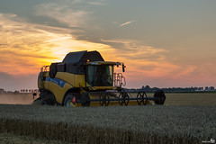 Harvesting (BraCom (Bram)) Tags: sunset summer holland twilight zonsondergang wheat farming nederland thenetherlands august zomer combine dust schemering harvesting zuidholland goereeoverflakkee oogsten landbouw newholland tarwe stof dirksland spectacularsunsetsandsunrises bracom