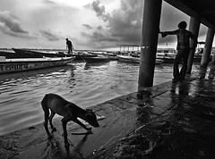 at varanasi (swarat_ghosh) Tags: street blackandwhite dog india monochrome clouds asian boats nikon asia streetphotography varanasi tamron silhoutte boatman pradesh benaras ghat uttar kasi d3000 1024mm swaratghoshphotography