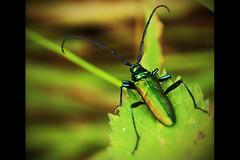 Cool bug. (DikkeBiggie) Tags: macro closeup canon bug insect cool tamron insekt gaaf 18270mm dgawc