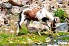 (Arthur Anab Shams (Cheetoo)) Tags: horse water meadows naran saifulmaluk lalazar riverkunhar jalkhad babusarpass lulusarlake babusartop pyalalake