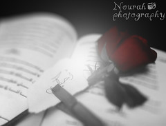 (Nourah Almajaishy) Tags: red flower love rose book you     nourah i     almajaishy