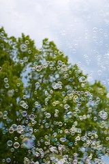 "Bubbles • <a style=""font-size:0.8em;"" href=""http://www.flickr.com/photos/45335565@N00/7862076270/"" target=""_blank"">View on Flickr</a>"