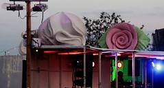 Dockville 2012 /// Torte