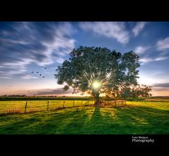 Searching for dreams... (Ivn Maigua) Tags: blue light tree green birds clouds landscape nikon thenetherlands ivn limburg nikond200 southlimburg artistictouch ivnmaigua