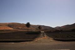 En el desierto (Laureano Moreno) Tags: viaje camino lanzarote palmeras verano desierto isla montaas 2012