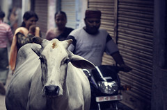 Holy Cow - Varanasi (Beyond Elements) Tags: street india cow holy lane varanasi crowded benaras congested holycow