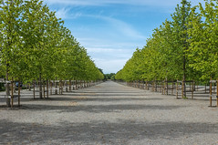 Drottningholm Alley (Adam Haranghy) Tags: park family trees green castle alley king sweden stockholm royal swedish queen gustav carl karl schloss sylvia allee drottningholm slott