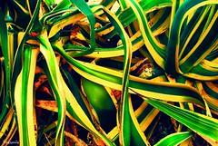 (Cristina Jiménez Ledesma) Tags: blue trees verde green smile field yellow azul hair model eyes árboles sitting village dress wind rustic pueblo viento modelo redhead amarillo ojos campo sonrisa sparrows fatima pelirroja smalltown vestido pelo fátima sesión gorriones rústico pueblerina