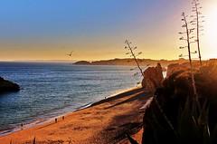 The Algarve (Sophiedoph) Tags: sunset sea sun hot beach portugal sand holidays rocks seagull canoneos1100d
