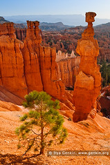 Thor's Hammer at Sunrise, Sunset Point, Bryce Canyon National Park, Utah, USA (ILYA GENKIN / GENKIN.ORG) Tags: morning travel sunset vacation usa mountain mountains southwest west tourism nature rock america sunrise landscape outside outdoors dawn evening utah us nationalpark twilight sandstone scenery rocks view unitedstates desert outdoor dusk famous hill scenic dry scene icon tourist canyon hills erosion spire formation american minerals area western mineral northamerica destination hoodoo bryce wilderness brycecanyon picturesque iconic canyons arid deserts attraction formations hoodoos eroded sunsetpoint thorshammer brycecanyonnationalpark bryceamphitheater bryceamphitheatre