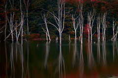Not Forgotten - in explore, front page (SunnyDazzled) Tags: longexposure trees red white reflection green nature water colors forest dark landscape dead evening trunks flooded